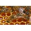 Продается мед оптом и в розницу